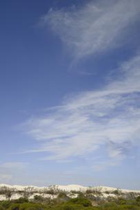 オーストラリア・西オーストラリア州にある白い砂漠と草原のある光景の写真素材 [FYI04292793]