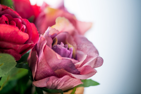 Artificial antique roses on white background.の写真素材 [FYI04292860]