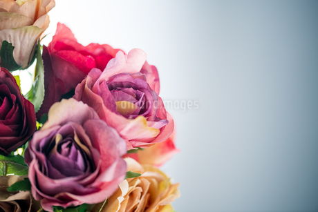 Artificial antique roses on white background.の写真素材 [FYI04292861]