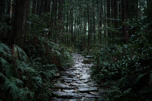 熊野古道の写真素材 [FYI04292867]