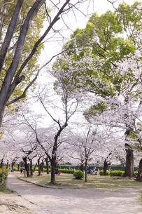 満開を迎えた鶴舞公園の桜の写真素材 [FYI04292889]