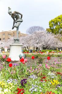 満開を迎えた鶴舞公園の桜の写真素材 [FYI04292904]