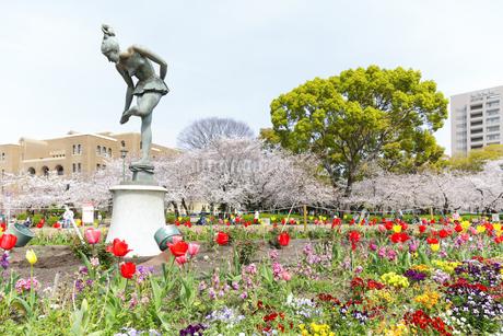 満開を迎えた鶴舞公園の桜の写真素材 [FYI04292905]
