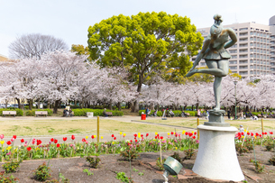 満開を迎えた鶴舞公園の桜の写真素材 [FYI04292906]