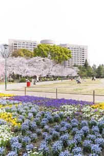 満開を迎えた鶴舞公園の桜の写真素材 [FYI04292909]