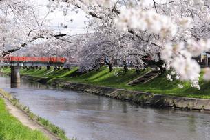 満開に咲き誇る新境川堤の桜の写真素材 [FYI04292923]