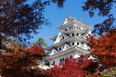青空と紅葉に映える郡上八幡城の写真素材 [FYI04293027]