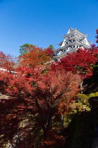 青空と紅葉に映える郡上八幡城の写真素材 [FYI04293028]