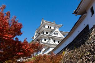 青空と紅葉に映える郡上八幡城の写真素材 [FYI04293029]