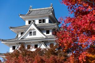 青空と紅葉に映える郡上八幡城の写真素材 [FYI04293030]