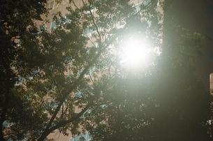 太陽 木 リフレクション ビル 台灣 夏の写真素材 [FYI04293433]