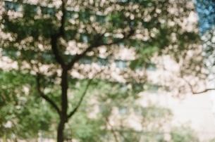 太陽 木 リフレクション ビル 台灣 夏 2の写真素材 [FYI04293434]