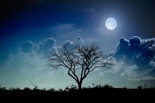 月夜と枯れ木の写真素材 [FYI04293671]