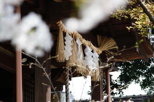 大年神社のしめ縄と紙垂の写真素材 [FYI04294167]