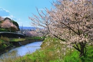 三室山(竜田公園)と桜の写真素材 [FYI04294349]