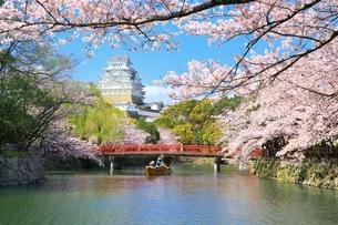 姫路城と桜と和船の写真素材 [FYI04294376]