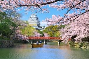 姫路城と桜と和船の写真素材 [FYI04294378]