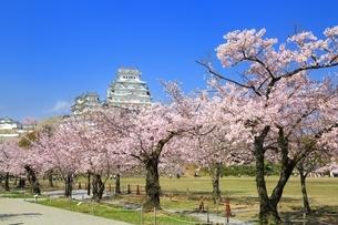姫路城と桜の写真素材 [FYI04294387]