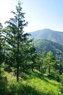 黒岳と木立ちの写真素材 [FYI04294729]