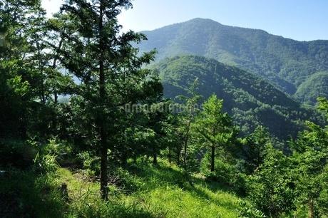 黒岳と木立ちの写真素材 [FYI04294730]