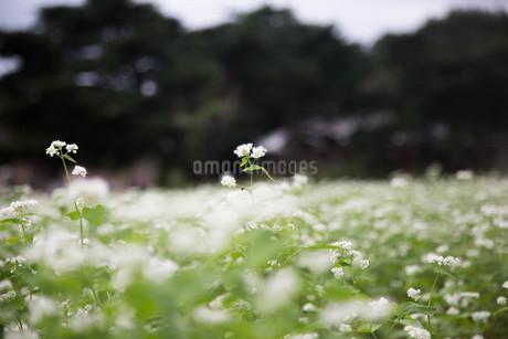 草花の写真素材 [FYI04294765]