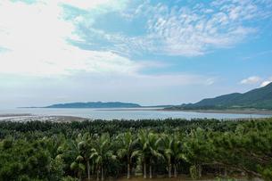 石垣島の風景の写真素材 [FYI04294950]