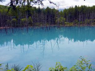 青い池 北海道 人工池 日本 観光地  HOKKAIDOの写真素材 [FYI04294986]