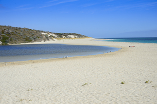 オーストラリア・西オーストラリア州にある海面の澄んだギルダートンビーチとムーア川の交わる所に集まるカモメの写真素材 [FYI04295185]