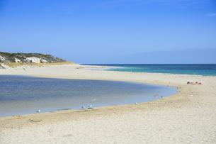 オーストラリア・西オーストラリア州にある海面の澄んだギルダートンビーチとムーア川の交わる所に集まるカモメの写真素材 [FYI04295187]