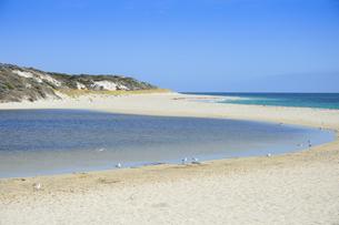 オーストラリア・西オーストラリア州にある海面の澄んだギルダートンビーチとムーア川の交わる所に集まるカモメの写真素材 [FYI04295188]
