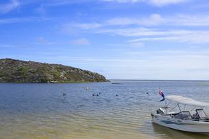 オーストラリア・西オーストラリア州にある澄んだ海面のギルダートンビーチとムーア川の交わる所にいた沢山の鳥と小舟の写真素材 [FYI04295213]