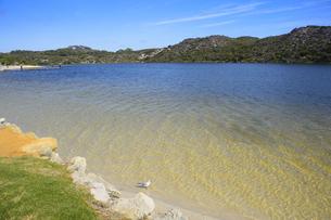 オーストラリア・西オーストラリア州にある澄んだ海面のギルダートンビーチとムーア川の交わる所にいたカモメの写真素材 [FYI04295214]