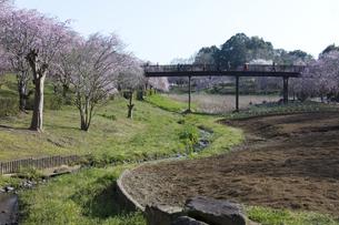 常陸風土記の丘・金龍橋と枝垂桜の写真素材 [FYI04295365]