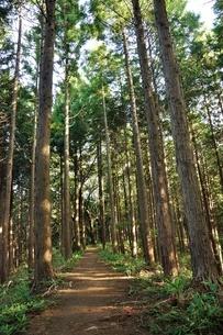 生藤山の植林帯の写真素材 [FYI04295877]