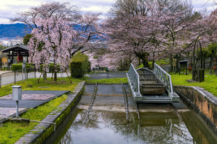 蹴上インクライン 船溜まりと桜の写真素材 [FYI04296116]