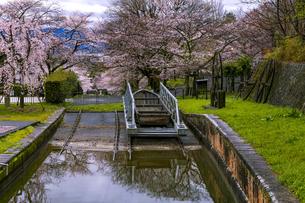 蹴上インクライン   船溜まりと桜の写真素材 [FYI04296117]