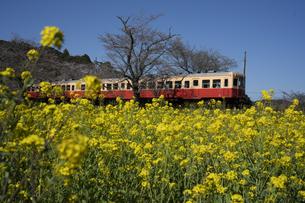 小湊鉄道の写真素材 [FYI04296315]
