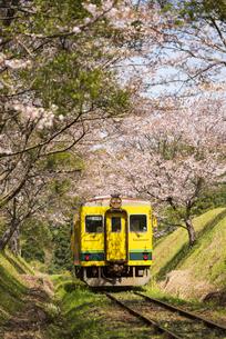 桜のトンネルを走るいすみ鉄道 総元駅~西畑駅の写真素材 [FYI04296326]