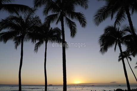 日没前のヤシの木の影の写真素材 [FYI04296518]