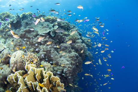 サンゴ礁と魚達の写真素材 [FYI04296816]
