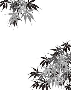 植物柄のパターンのイラスト素材 [FYI04297055]
