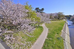 岡崎公園と桜 の写真素材 [FYI04297173]