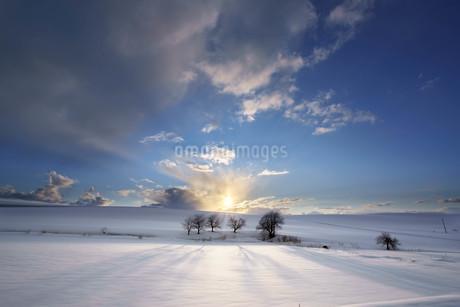 北海道士別市川西町 家族団欒の木の写真素材 [FYI04297191]
