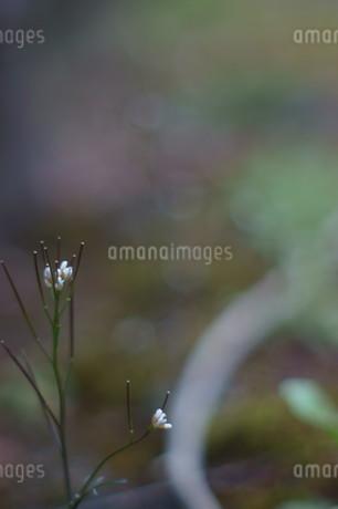 道端の小花の写真素材 [FYI04297324]