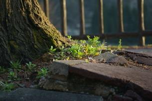 木の根の写真素材 [FYI04297342]