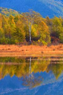 【小田代原】 小田代湖に映る貴婦人の写真素材 [FYI04297602]