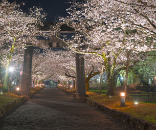 長崎県 桜 大村公園 (玖島城跡)の写真素材 [FYI04297605]