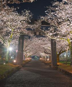 長崎県 桜 大村公園 (玖島城跡) の写真素材 [FYI04297606]