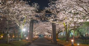 長崎県 桜 大村公園 パノラマ (玖島城跡) の写真素材 [FYI04297607]