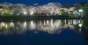 長崎県 桜 大村公園 パノラマ (玖島城跡) の写真素材 [FYI04297609]